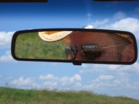 Rearview Johnny's Avatar