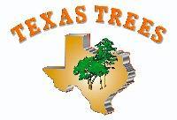TexasTrees's Avatar