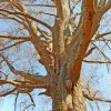 little_guy_in_a_big_tree-brandt
