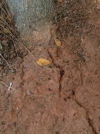 soil crack
